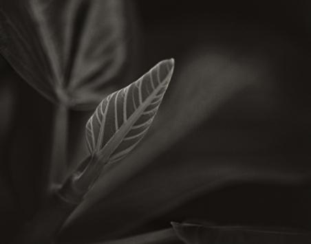 A Leaf.