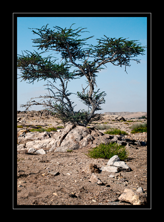 Ba...rd tree