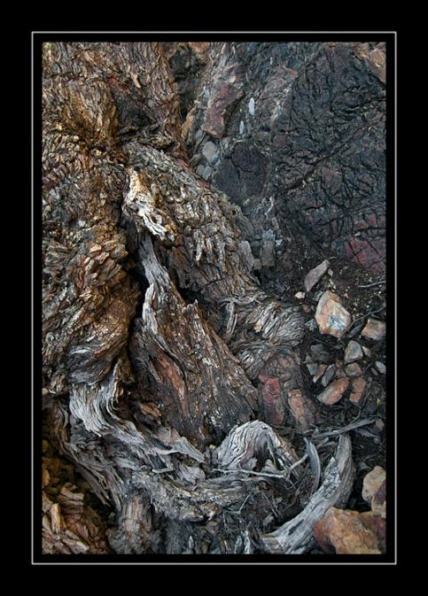 Rock-&-tree-root-detail