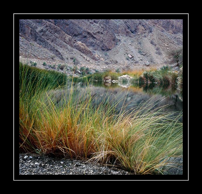Wild-grass-&-water