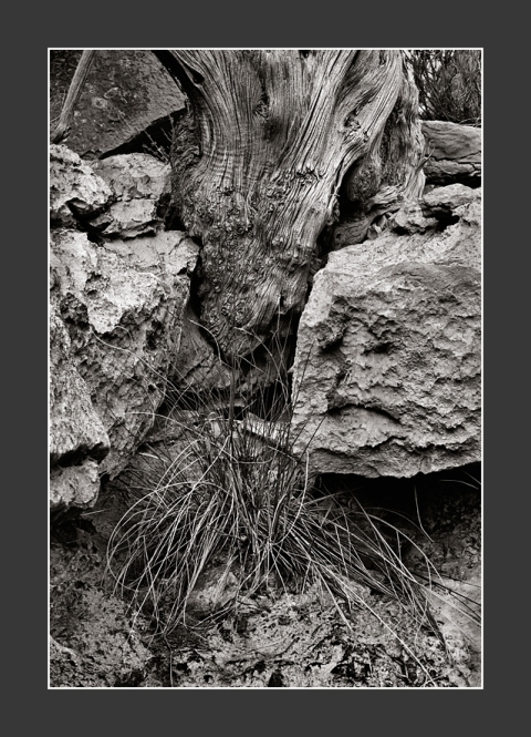 Tree-root-&-wild-grass