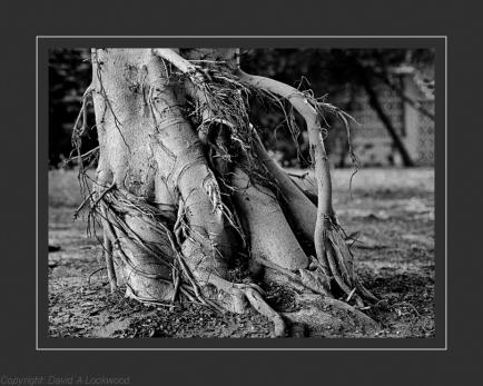 Garden tree roots