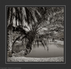 Palm & water Warm Tone