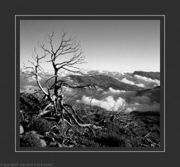 Tree 8 B & W