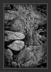 Tree & Rocks 10