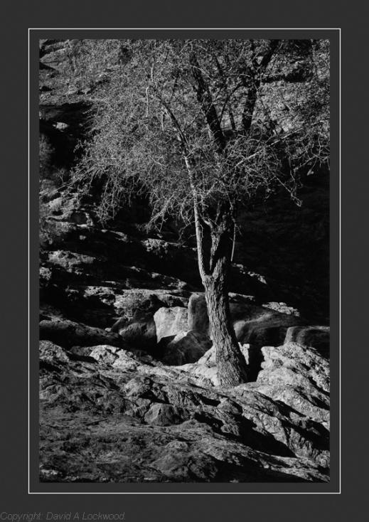 Tree & Rocks