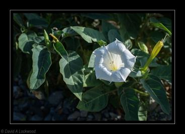 A flower No5