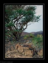 Bush & Rock