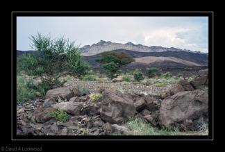 Bushes & rocky terrain