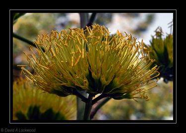 Garden Flower 4