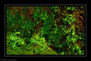 Moss & Plants