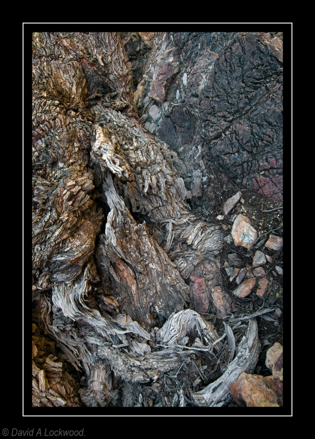 Rock & tree root detail