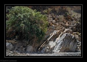 Tree & Rocks 9