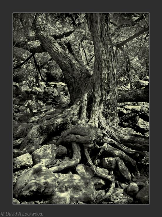 Tree roots & rocks