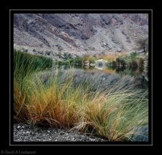 Wild grass & water