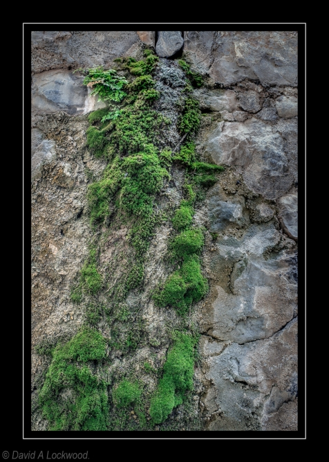 Moss & rock