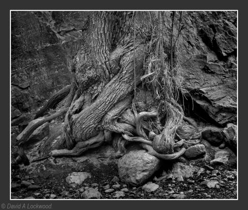 Tree roots No2