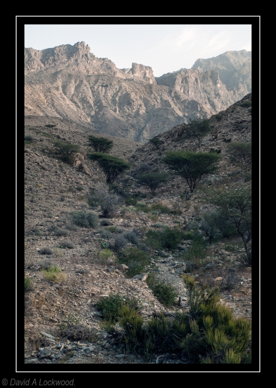 Wadi - early evening 2