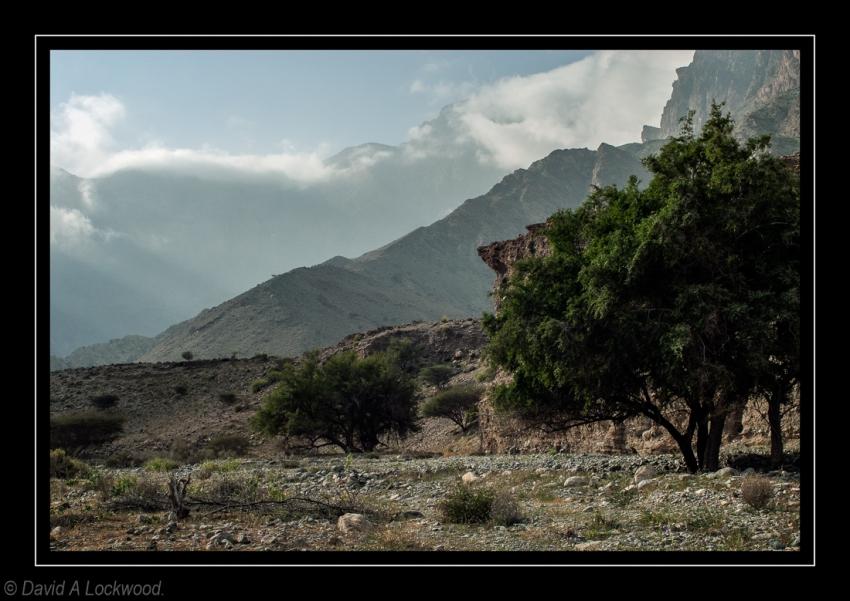 Wadi - early evening 3