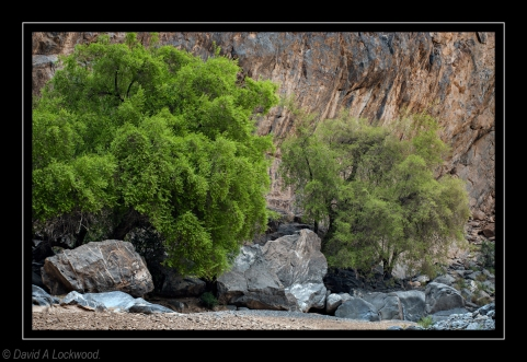 Trees against rock - Tanuf