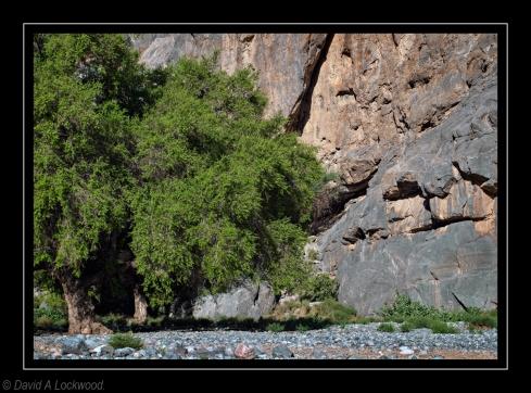 Trees Tanuf