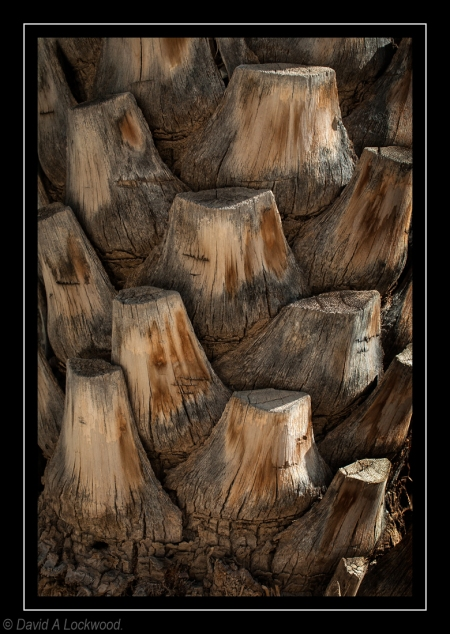 Palm trunk.