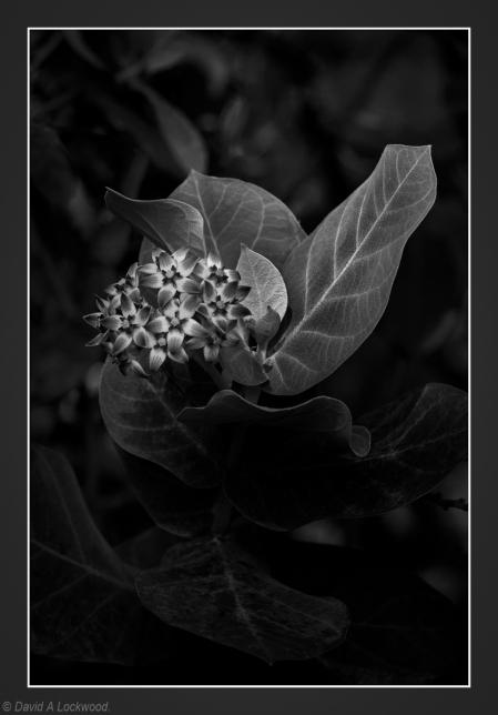 Leaf & flower
