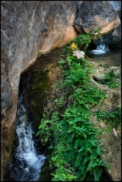 Wadi Qurai. 10