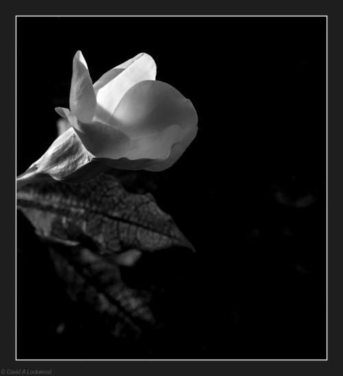 A flower No6