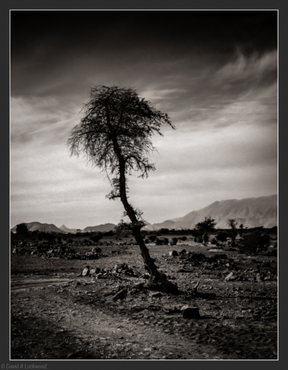 Tree - early evening & diffused_