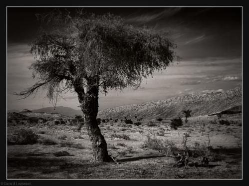 Tree & scrub