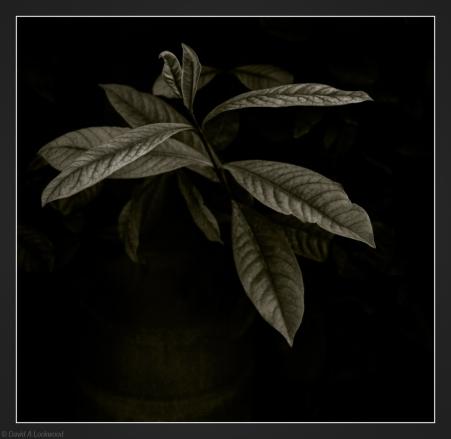 Leaf against palm trunk