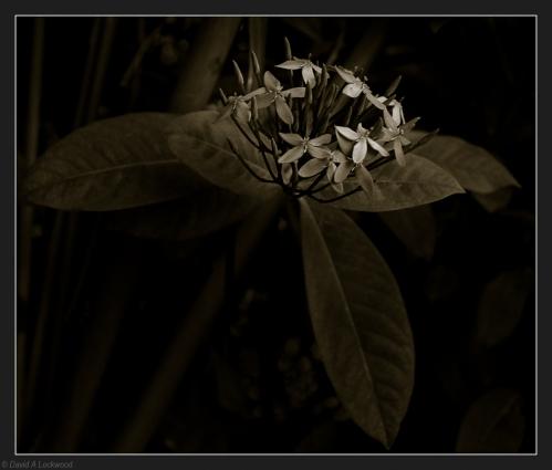 A flower No.6