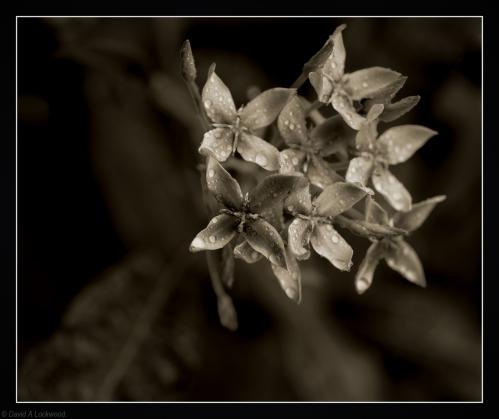 A Flower No.7