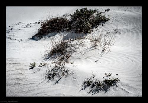 Sand plants Masirah.