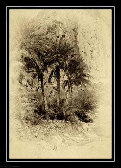 3 Palm trees
