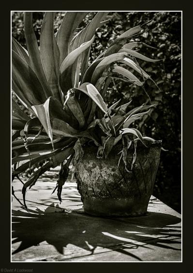 Garden plant & old pot.