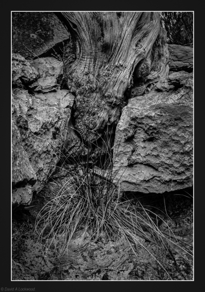 Tree root in rocks.