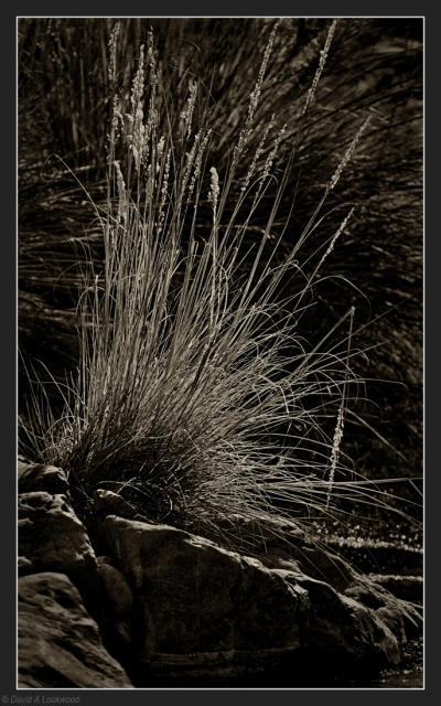 Rushes & rock detail