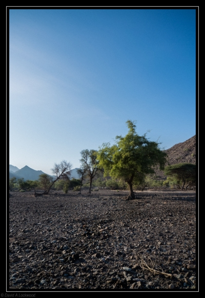 Trees - Dima wa'Tayeen