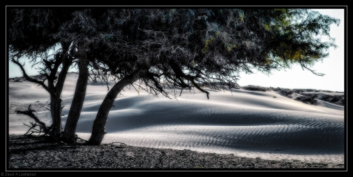 Desert oasis_