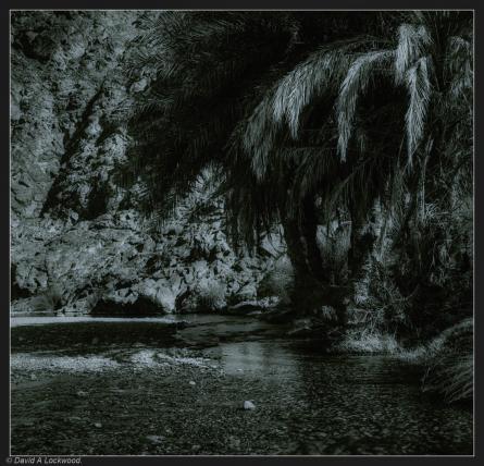 Palms - Wadi Abyad