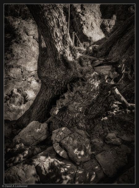 rock & tree branch detail