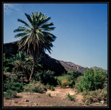 Wadi Palm
