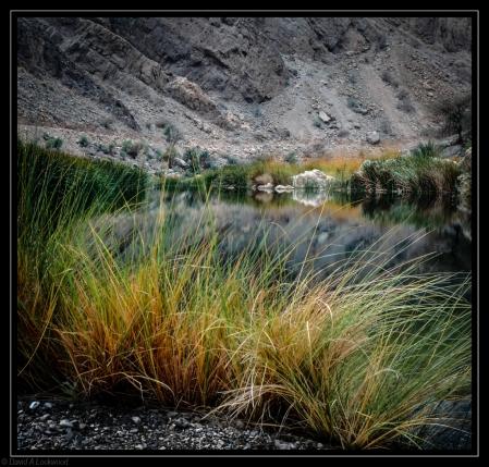 Wild grass & water R.Md
