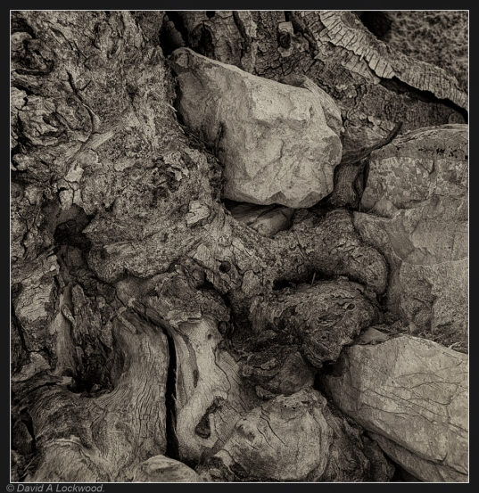 Tree root detail No2