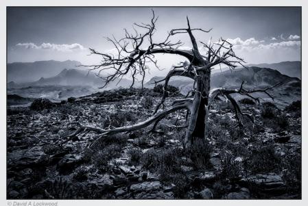 Dead tree - blue tone.