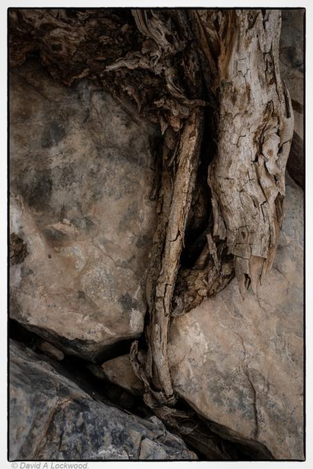 Roots & Rocks No2