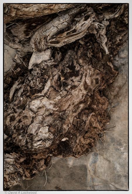 Roots & Rocks No3.