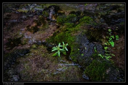 Moss & plant